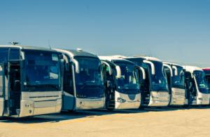 Flota Maxibus Travel